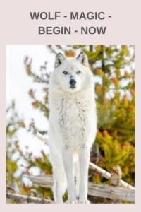 wolf magic begin now